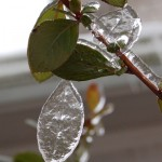 Icy Garden Photos: Leafcicles, Monkey Heads, and Winter Blooms