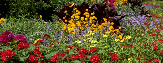 some annuals have seasonality