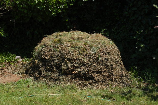 norway maple compost pile