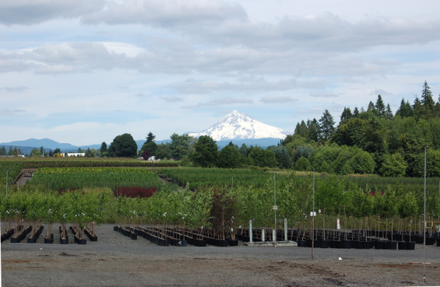 j frank schmidt nursery with mt hood in background