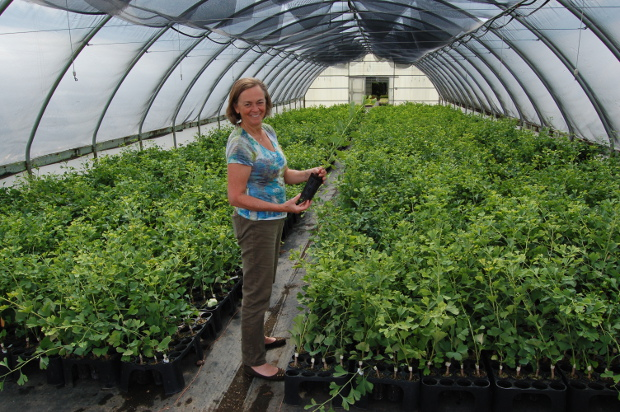 nancy buley in a housefull of gingkos at j frank schmidt nursery