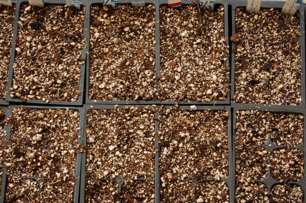 use a soilless mix for starting seeds