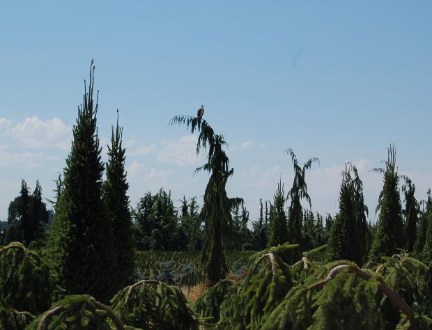 KG farms osprey