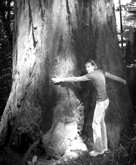 if i was ernest wilson amy campion hugging coast redwood tree resized