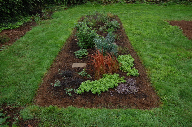 shareable perennial plants after the rains come