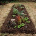 A Bed of Shareable Perennial Plants