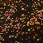 Looking Down Instead of Up:  Autumn Leaves