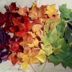 A Rainbow of (Borrowed) Autumn Leaves