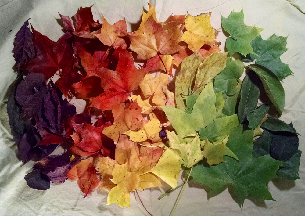 fall leaf collage 1000