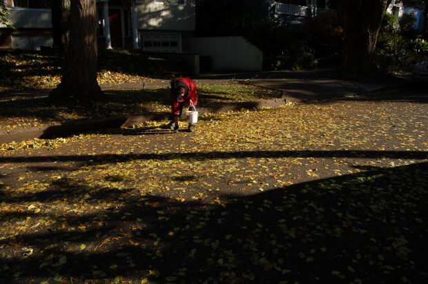 picking up ginkgo fruits from the street 111114