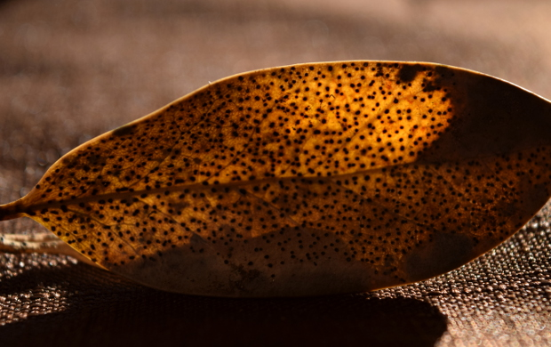 beauty of death in the garden glowing polka dot leaf 113014 010