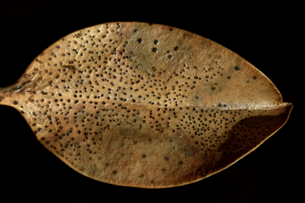 beauty of death in the winter garden trout leaf 113014 159