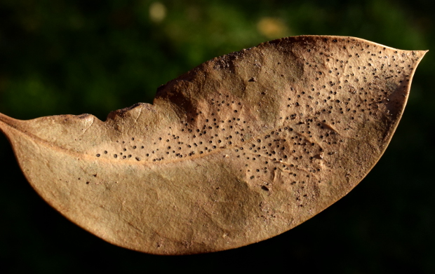 decaying leaf before 113014 153