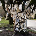 A Wishing Tree Blooms in Portland