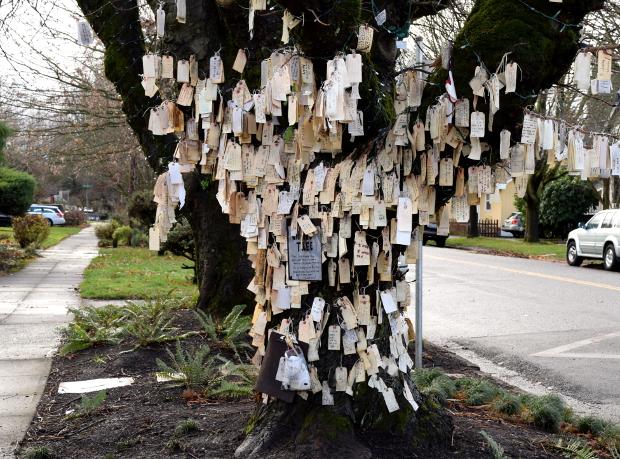 portlands wishing tree 120614 070