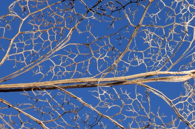 skeletonized leaf against blue background 113014 128