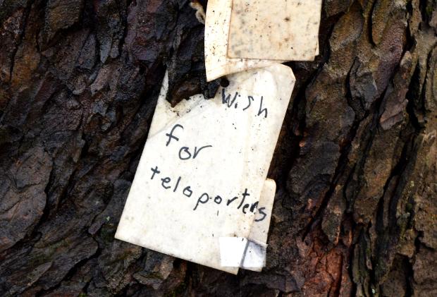 wish on portlands wishing tree teleporter 120614 034