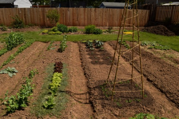 backyard landscaping ideas and before and after photos sweet peas 050315 123