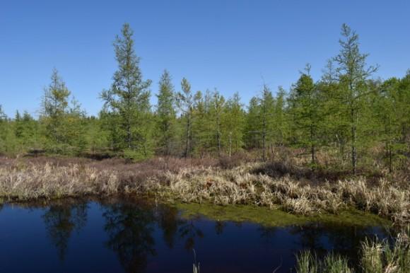 peat bog and blue water in isle minnesota 052315 016
