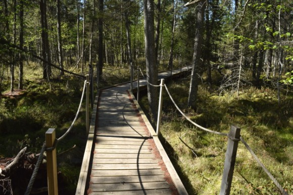 peat bog boardwalk in kathio state park minnesota 052215 163