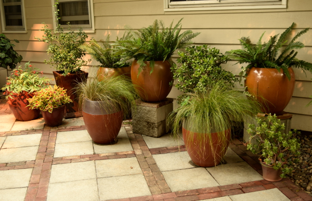 shady garden big pots 082215 169