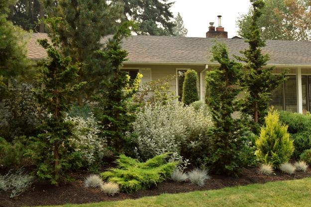 shady garden conifers 082215 126
