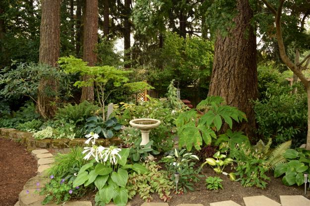 shady garden under the firs 082215 252