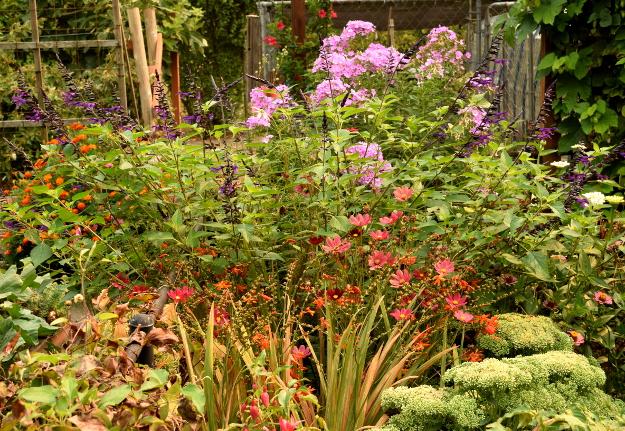 vegetable garden cottage garden colors 082215 117