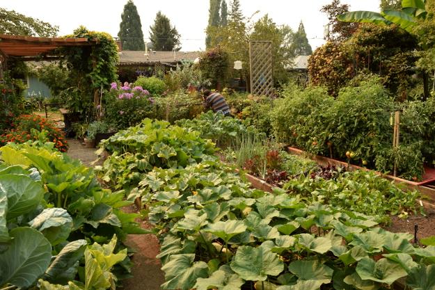 vegetable garden raised beds 082215 097