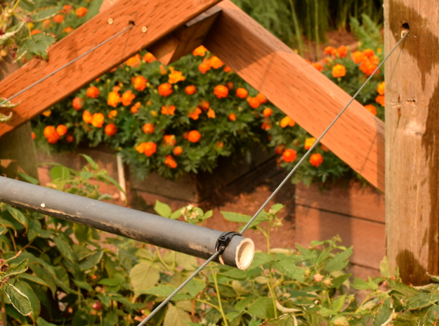 vegetable garden raspberry cable 082215 092