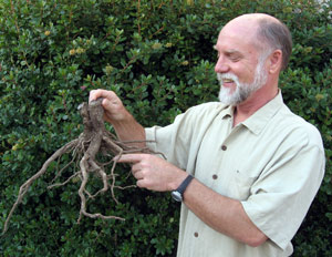 robert kourik with root
