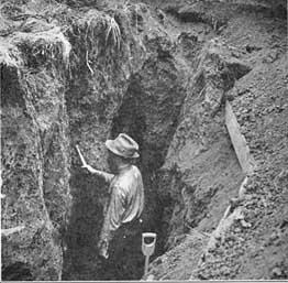 weaver excavating roots