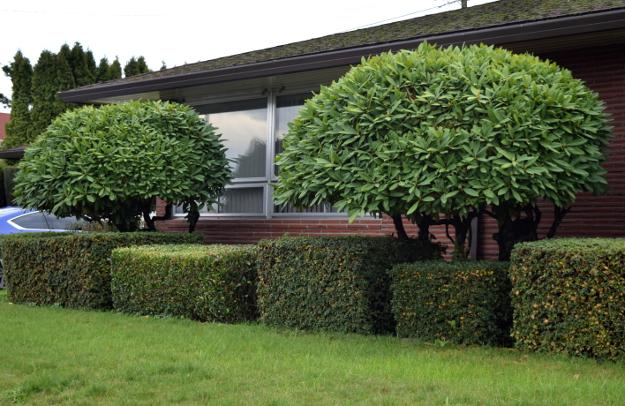 topiary asian look x121915 241