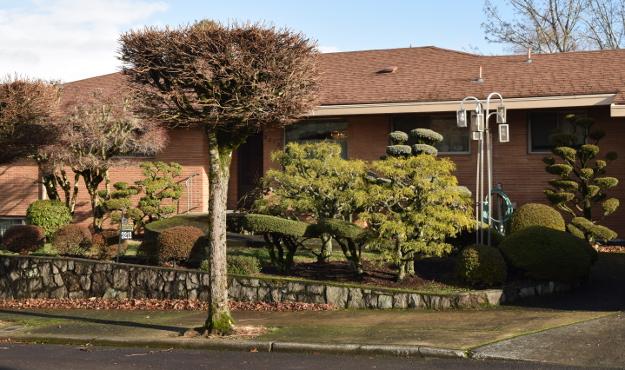 topiary assortment x122015 179