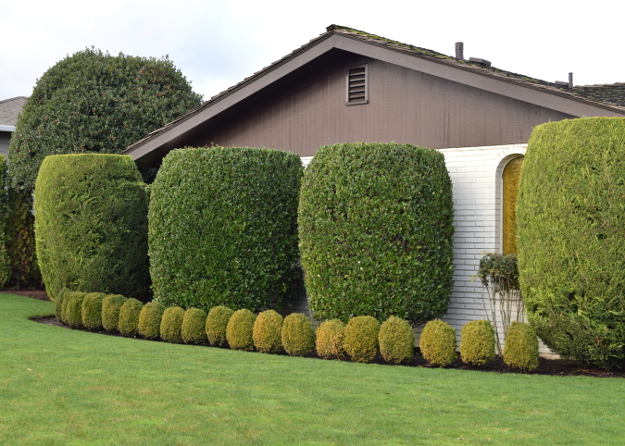 topiary big and little x121915 048