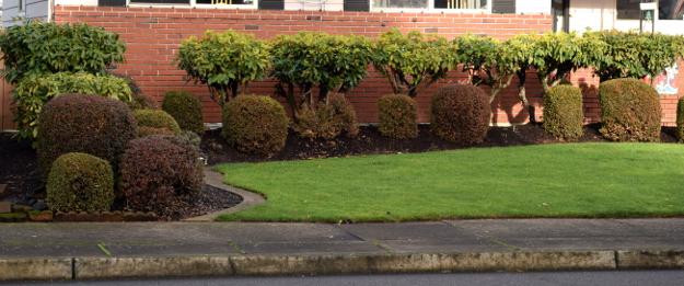 topiary not good x121915 027