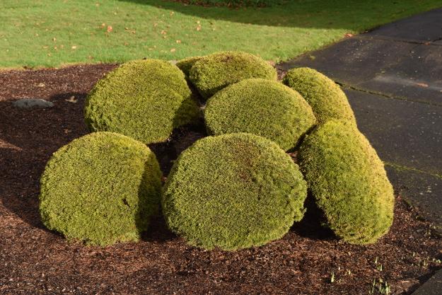 topiary pine bar stool seats x122015 059