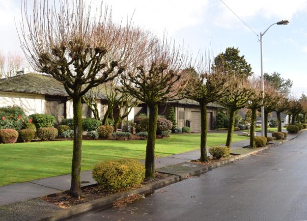 topiary pollard x122015 045