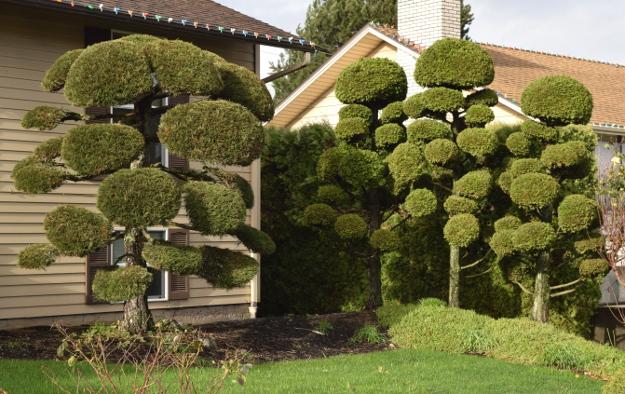 topiary pompom paloosa x122015 062