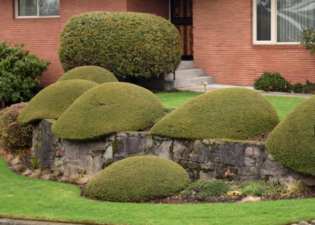 topiary slugs x121915 183