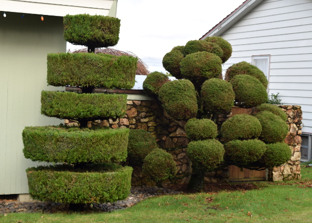 Topiary The World S Best Gardening Blog
