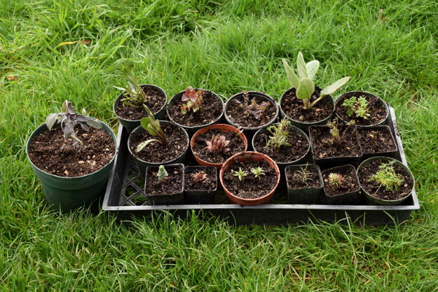 irishman's cuttings potted up 031616 070
