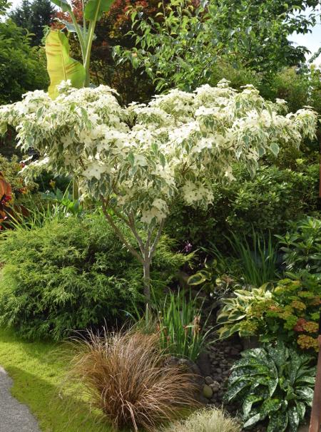 ANLD garden tour wagner dogwood 060816 2