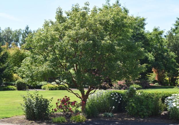 garden conservancy wetland 060516