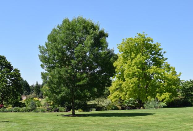 garden conservancy wetland trees 060516