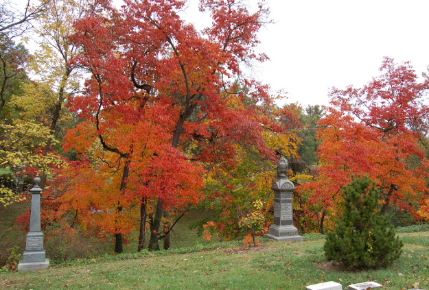 sassafras-tree-fall-color-101614-457
