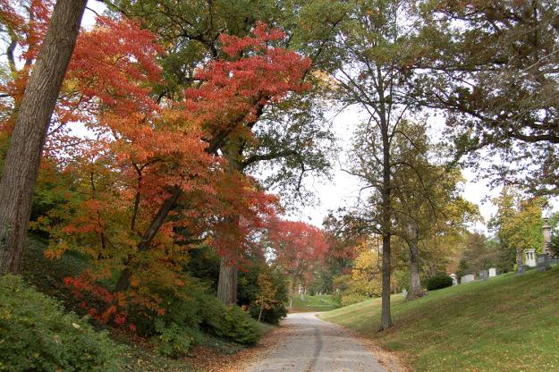 sassafras-tree-spring-grove-100811-452