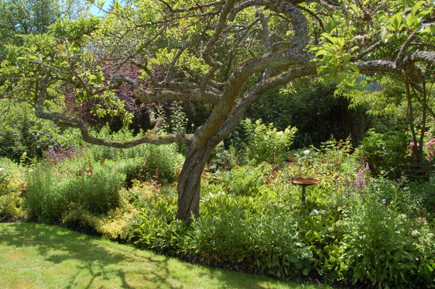 Letters Garden: The World's Best Gardening Blog