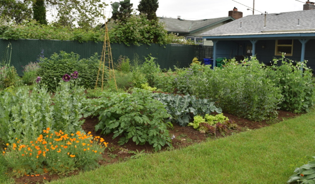 when i was planning my first vegetable garden i had a romantic vision of how it would go - How To Start A Vegetable Garden From Scratch