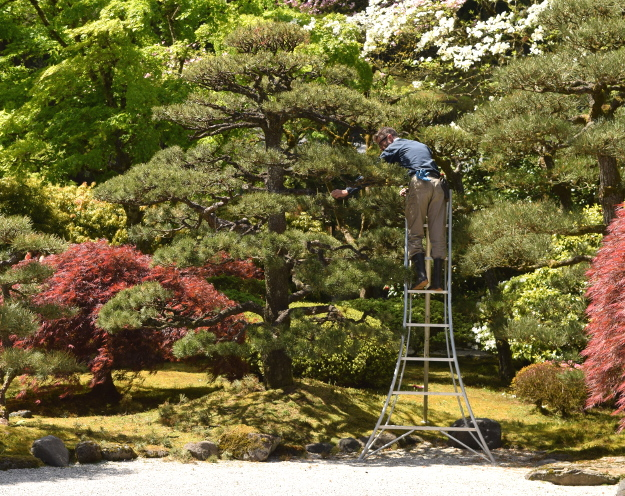 Japanese Garden The World S Best Gardening Blog